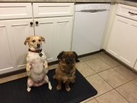 Puptails by Pals for Paws | Linus and Lucy